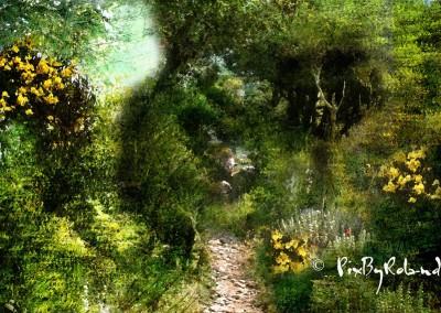 Jungle d'Amorgos