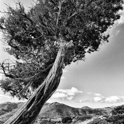 les arbres sont rares
