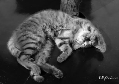 Je suis si fatigué...