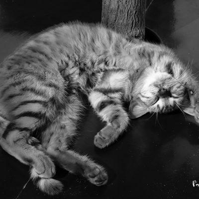 Chat épuisé