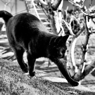 Chat ne porte pas malheur